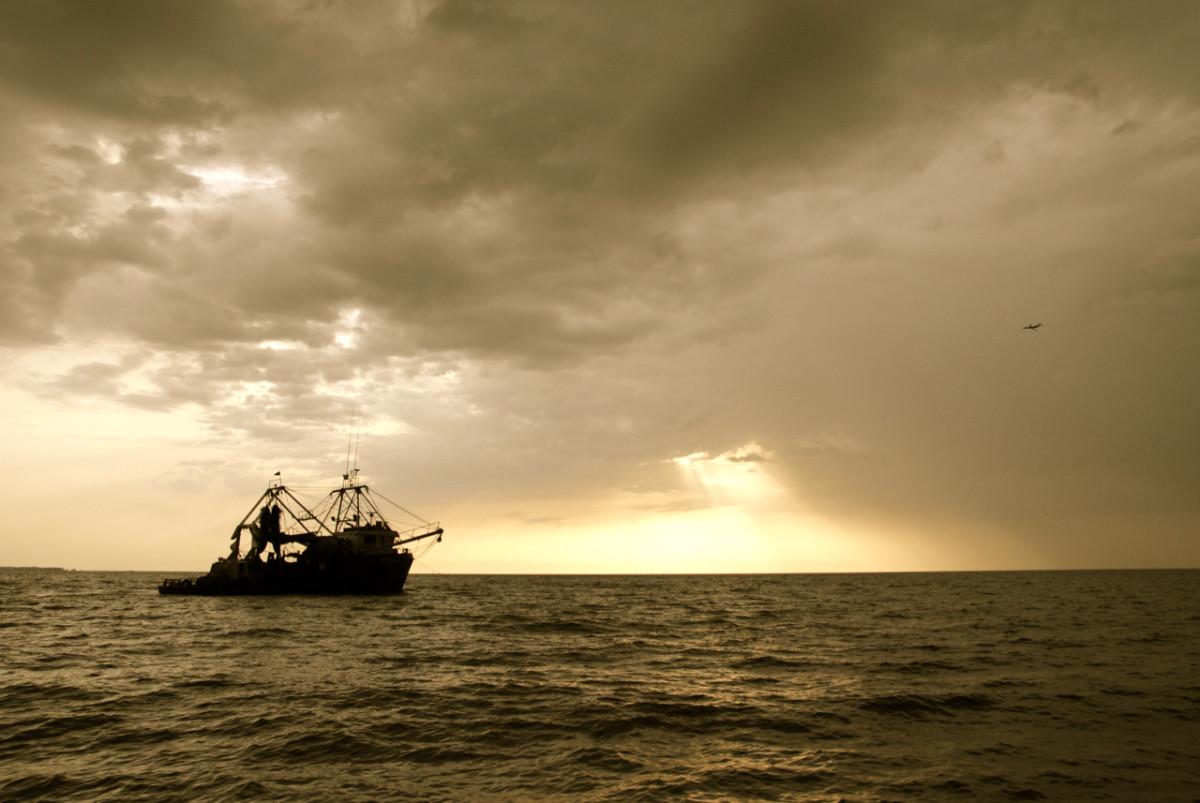 Libreville . 2009 . Nature Series