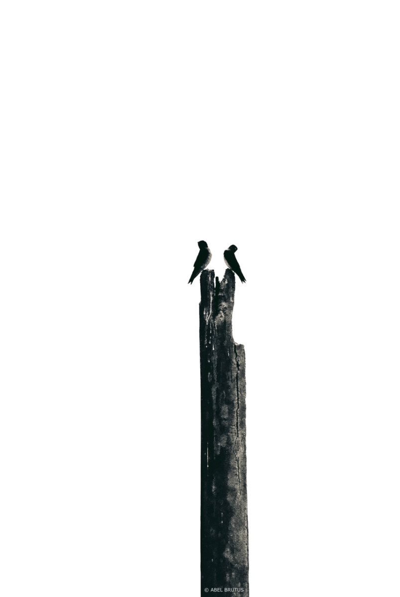 Abel – Birds 01 – Version 5